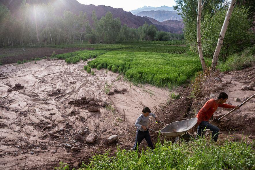 Dois irmãos a trabalhar em vão para recuperar os seus campos de batata e trigo, depois ...