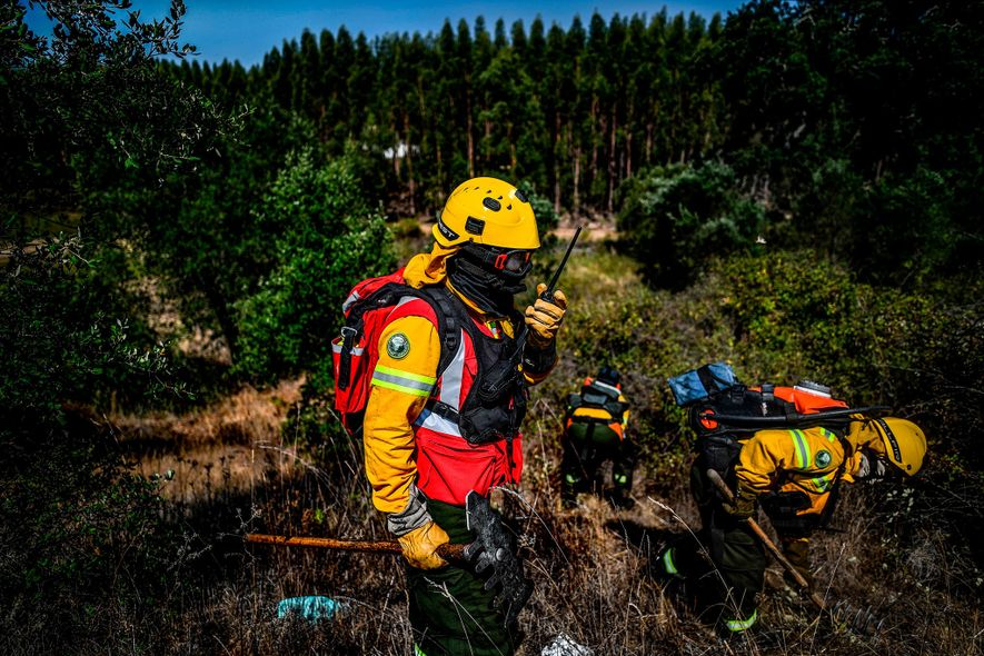 Bombeiros privados limpam arbustos perto de uma floresta de eucaliptos durante um exercício feito em agosto, ...