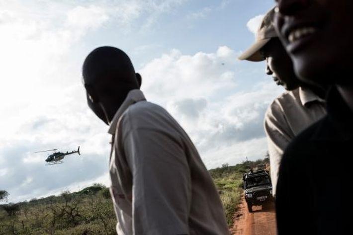 A equipa de colares move-se para onde um elefante foi avistado por avião e tranquilizado por ...
