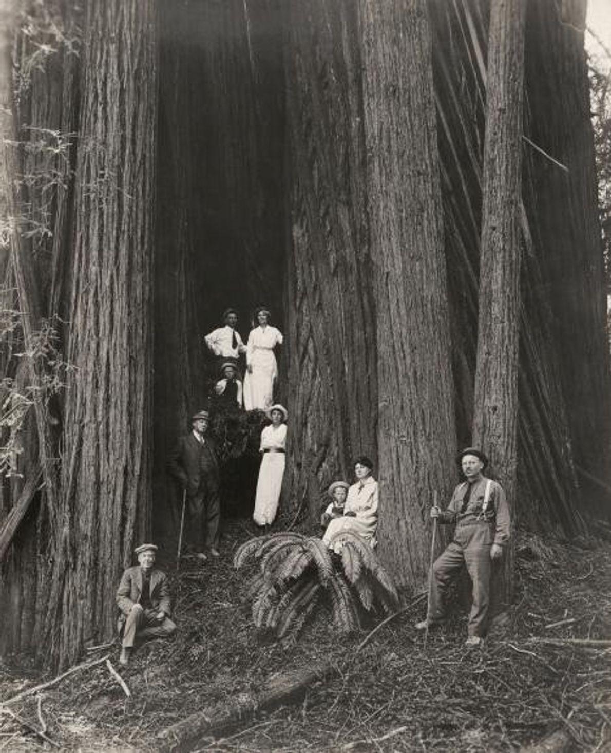 Um grupo de homens, mulheres e crianças posa à frente de espécimes gigantes de pau-brasil.