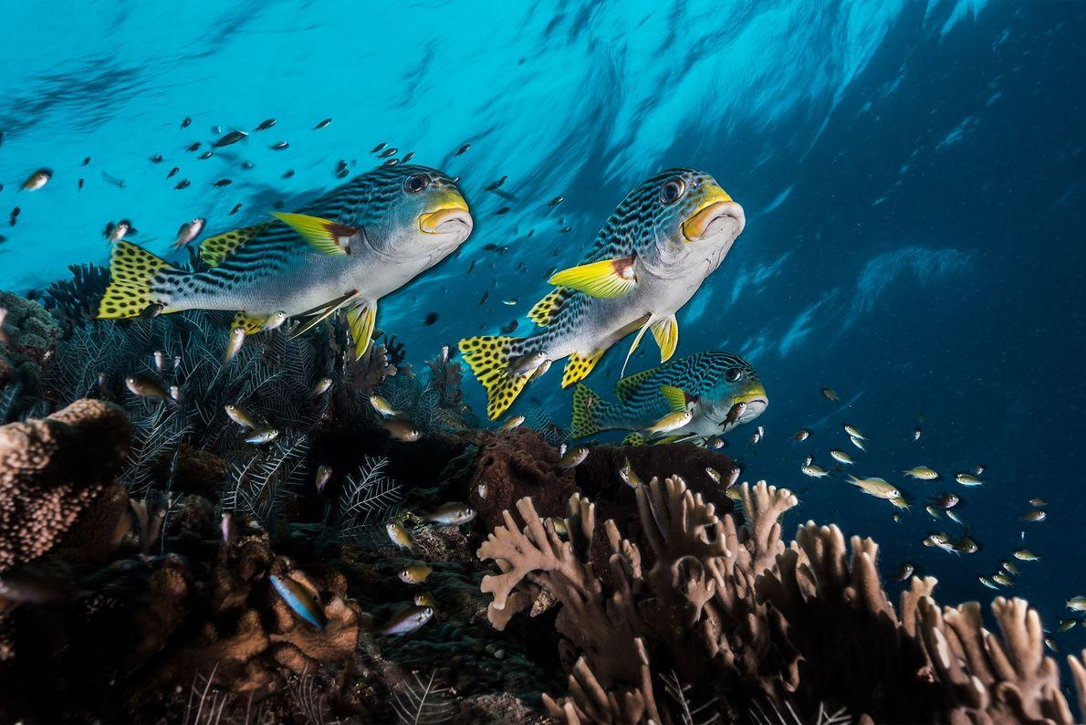 Peixes no Recife de Coral de Tubbataha