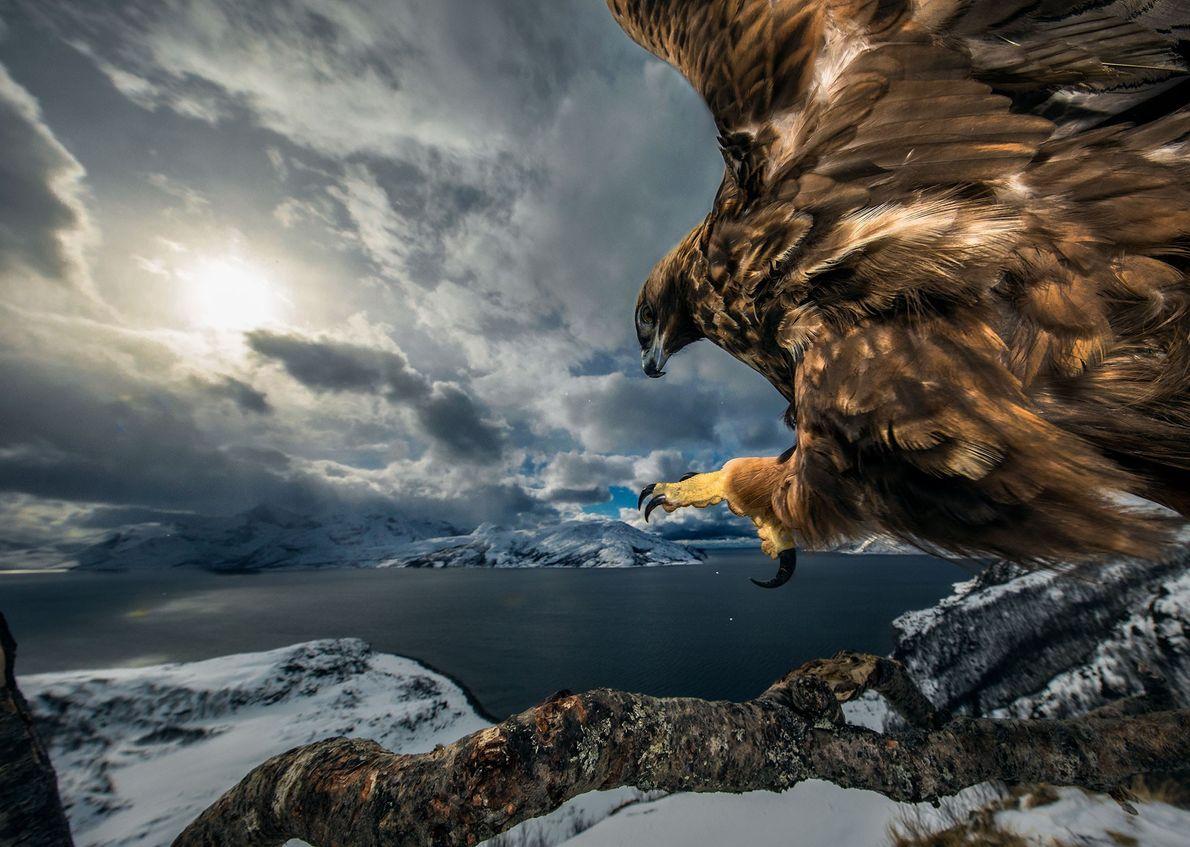 O fotógrafo norueguês Audun Rikardson venceu a categoria Comportamento de Aves com esta fotografia de uma ...