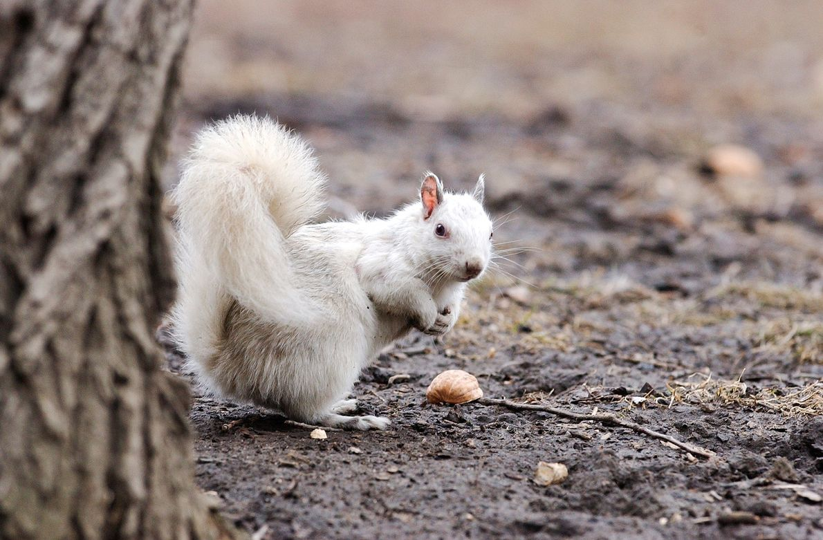Esquilo de cor diferente