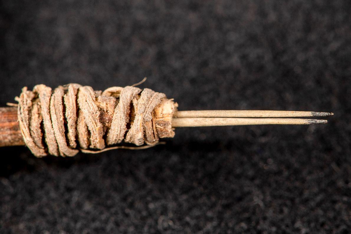 feixe de espinhos de cacto utilizado para perfurar e pintar pele humana.
