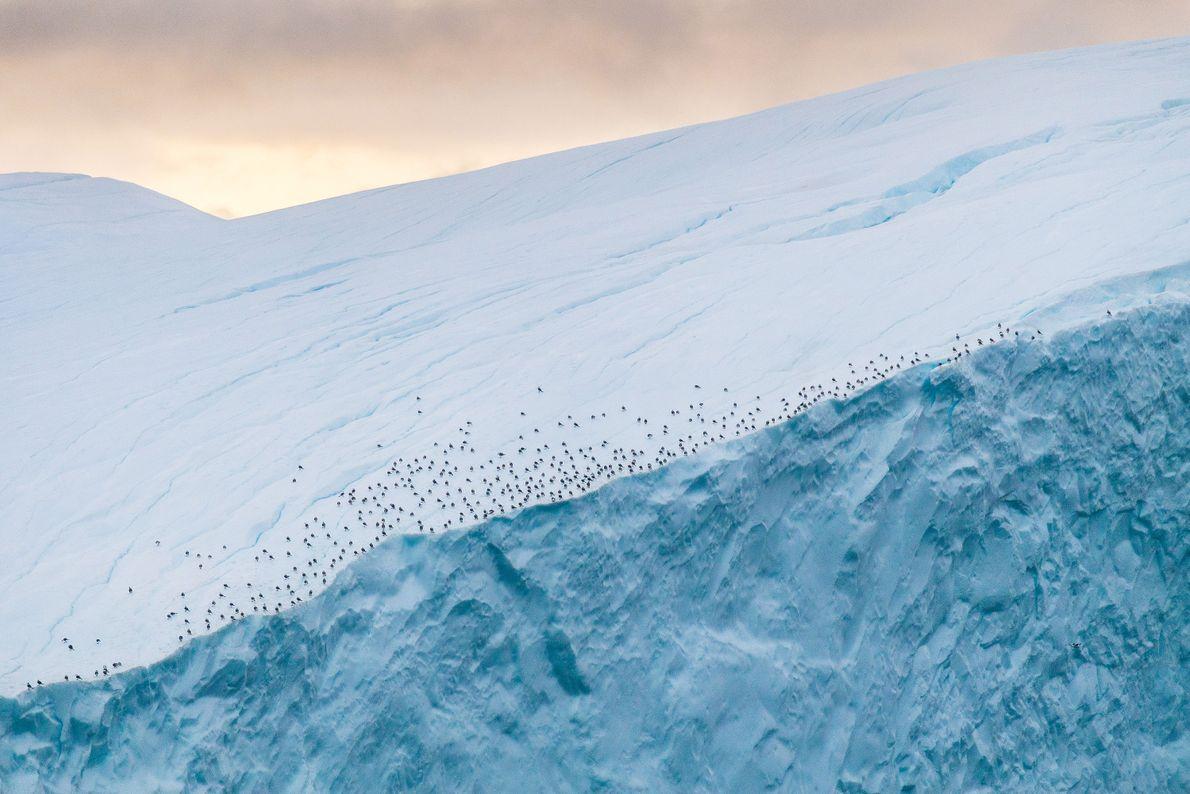 Aves descansam no limite de um icebergue