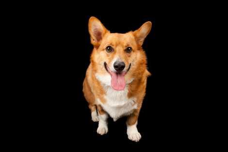 Por Que é Que Os Cães São Tão Amistosos?