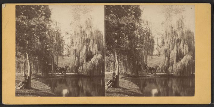 Um homem a descansar debaixo de uma árvore, em Green-Wood, numa imagem criada depois de 1850. ...