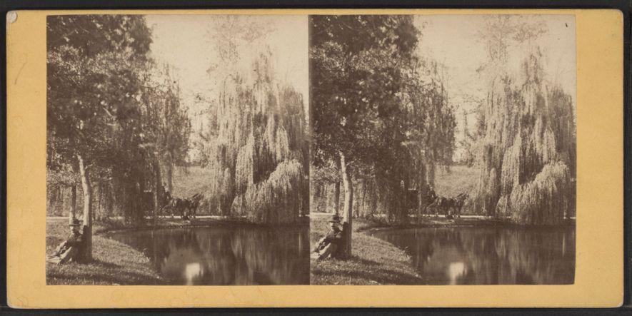 Um homem a descansar debaixo de uma árvore, em Green-Wood, numa imagem criada depois de 1850. Na década de 1850, o Cemitério Green-Wood era a segunda maior atração turística dos EUA, a seguir às Cataratas do Niágara.
