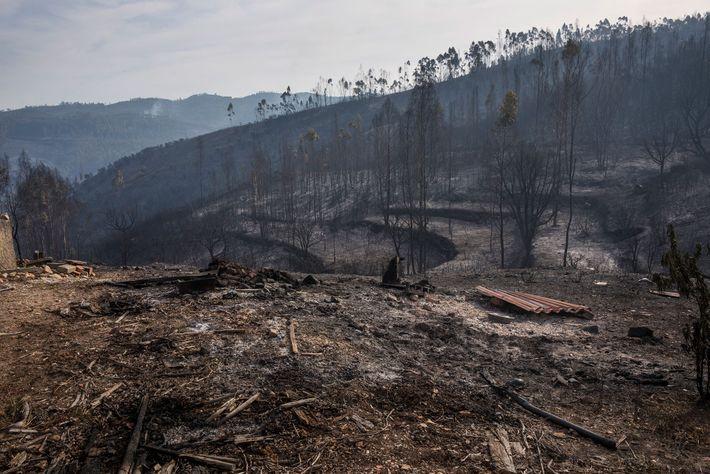 Uma paisagem devastada pelo incêndio em Vila de Rei. As árvores queimadas revelam terrenos trabalhados, o ...