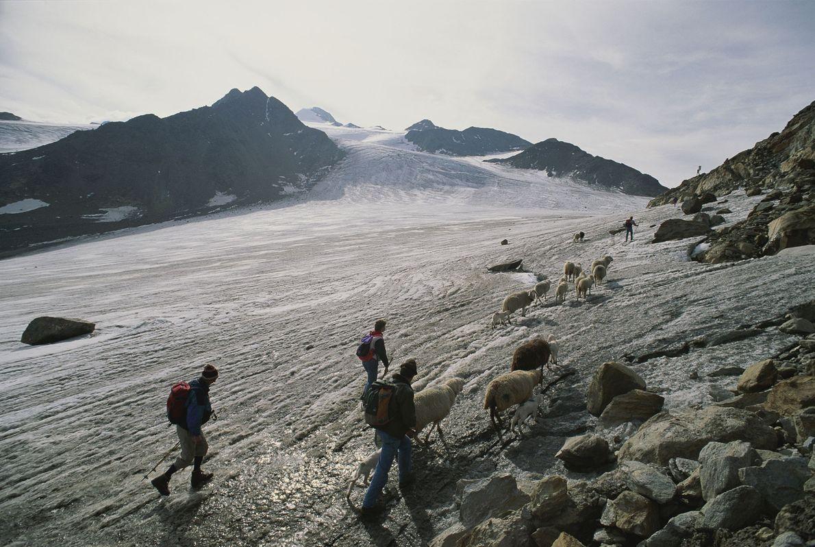 Pastores modernos atravessam o desfiladeiro alpino onde o Homem do Gelo foi encontrado.