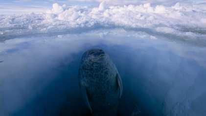 A Vida dos Animais Polares nos Locais Mais Frios do Planeta