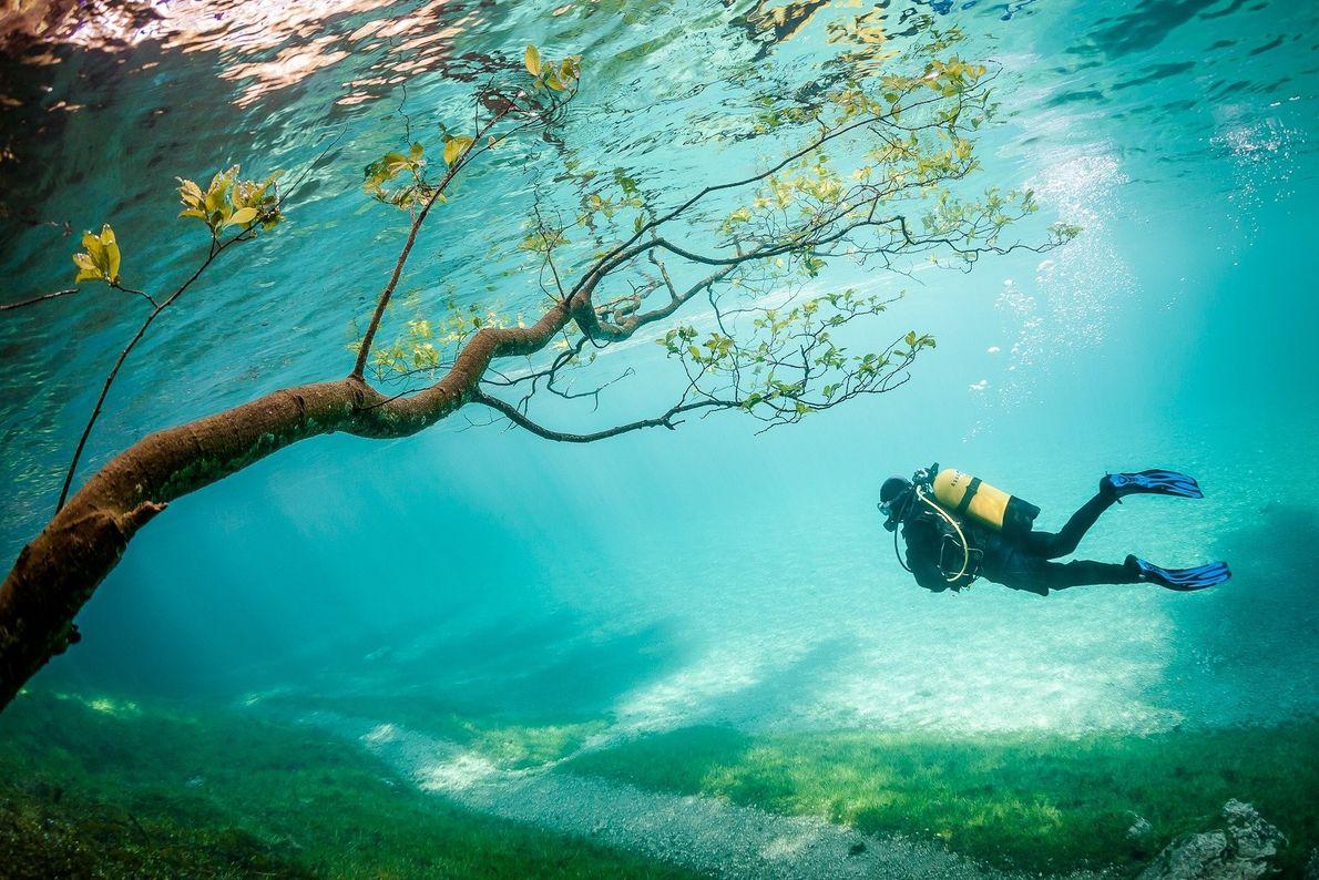 Mergulhador junto a uma árvore submersa
