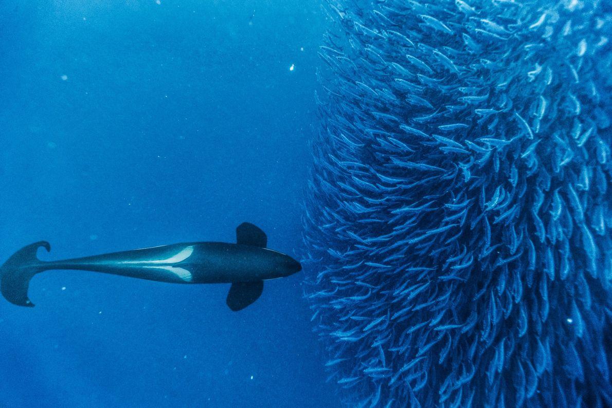 Baleias à Volta do Mundo