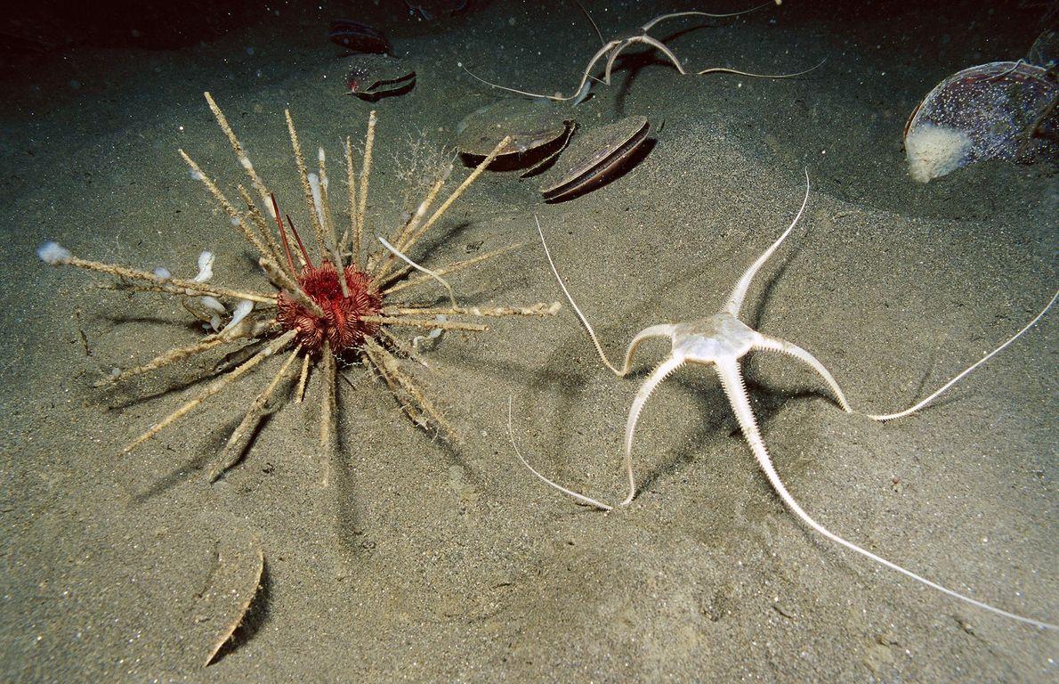 A Antártida é um destino muito popular entre os cientistas que investigam oceanos alienígenas. As espessas ...