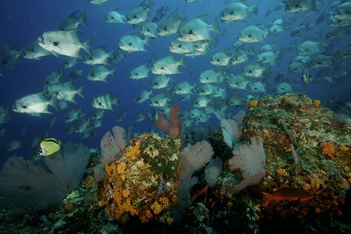 Ilha de Coíba