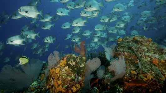 Ilha de Coíba: Vida Debaixo de Água