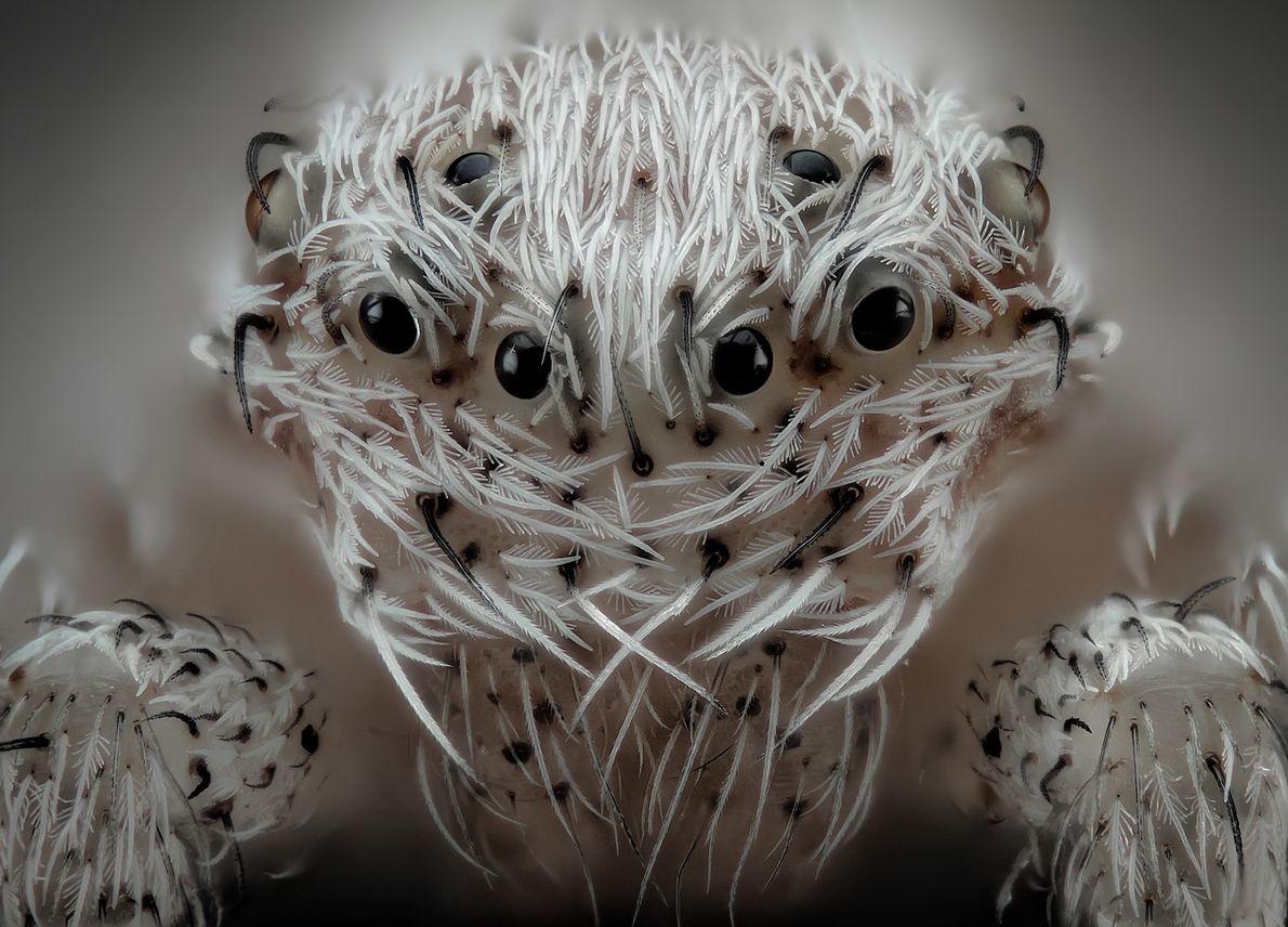 O fotógrafo espanhol Javier Rupérez, especialista em imagens macro, criou este retrato de uma aranha sobrepondo ...