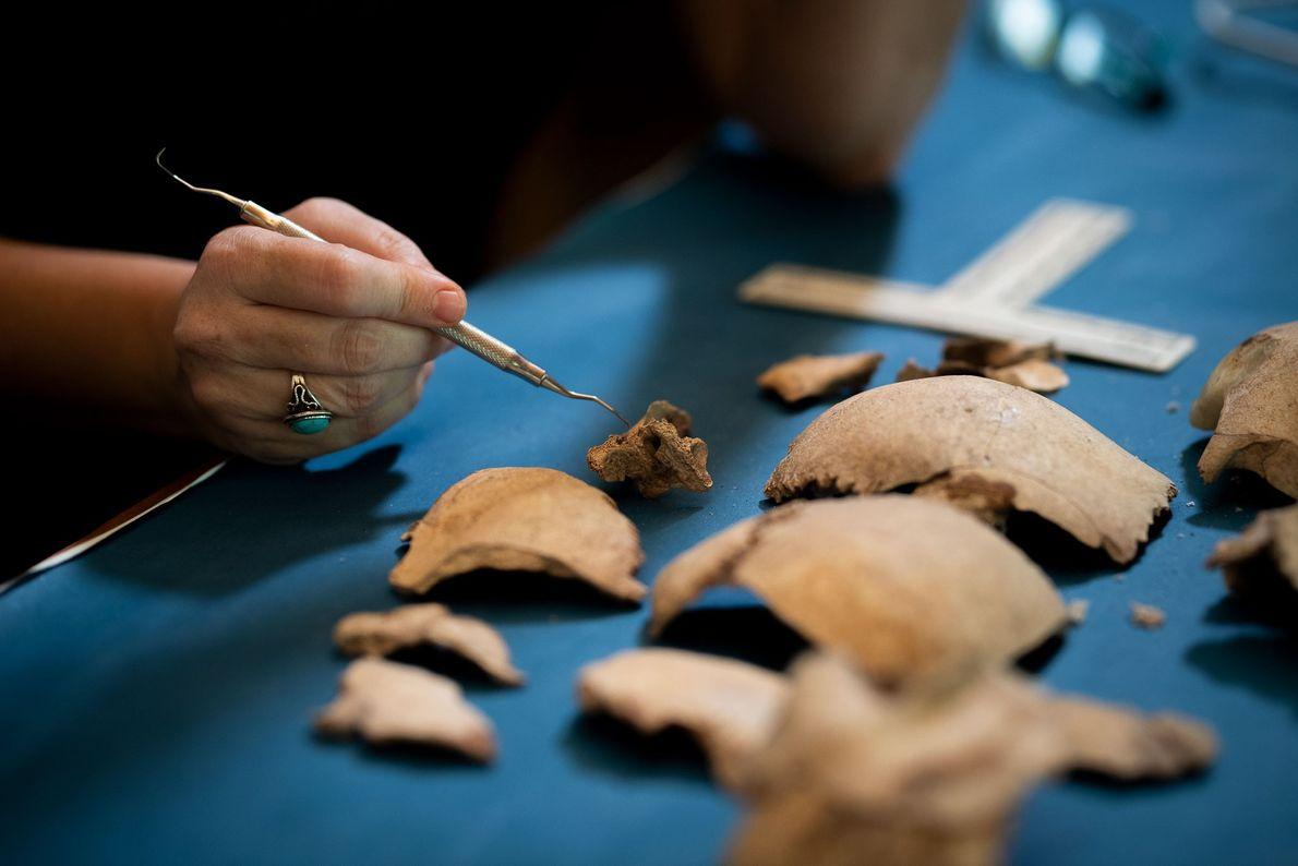 Partes de esqueletos humanos – supostamente da Ilha Nikumaroro – são examinados no Museu Te Umanibong ...