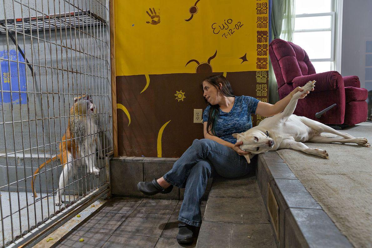 Bobbi Phelan adquiriu um macaco-pata, em parte porque estes tendem a evitar conflitos. Mesmo assim, Eujo ...