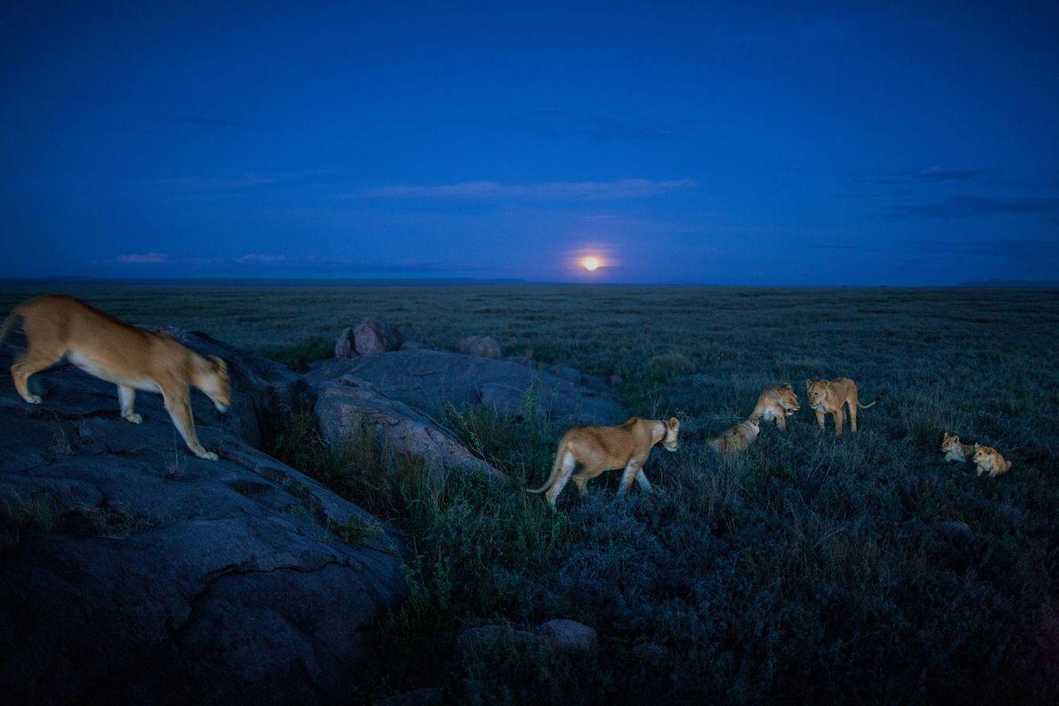Membros do grupo Vumbi partem para uma caçada noturna.