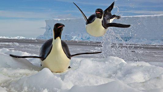 A Vida dos Animais Polares