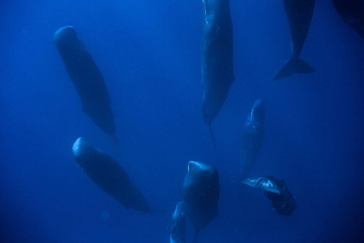 baleias a fazerem uma sesta