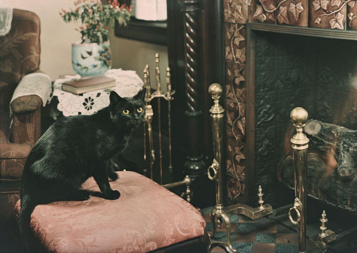 Um gato doméstico, de pelo curto e negro.