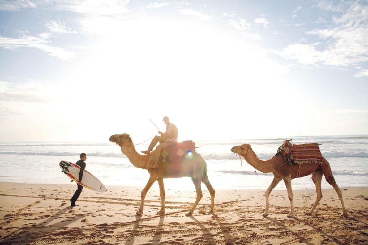Camelos na Praia