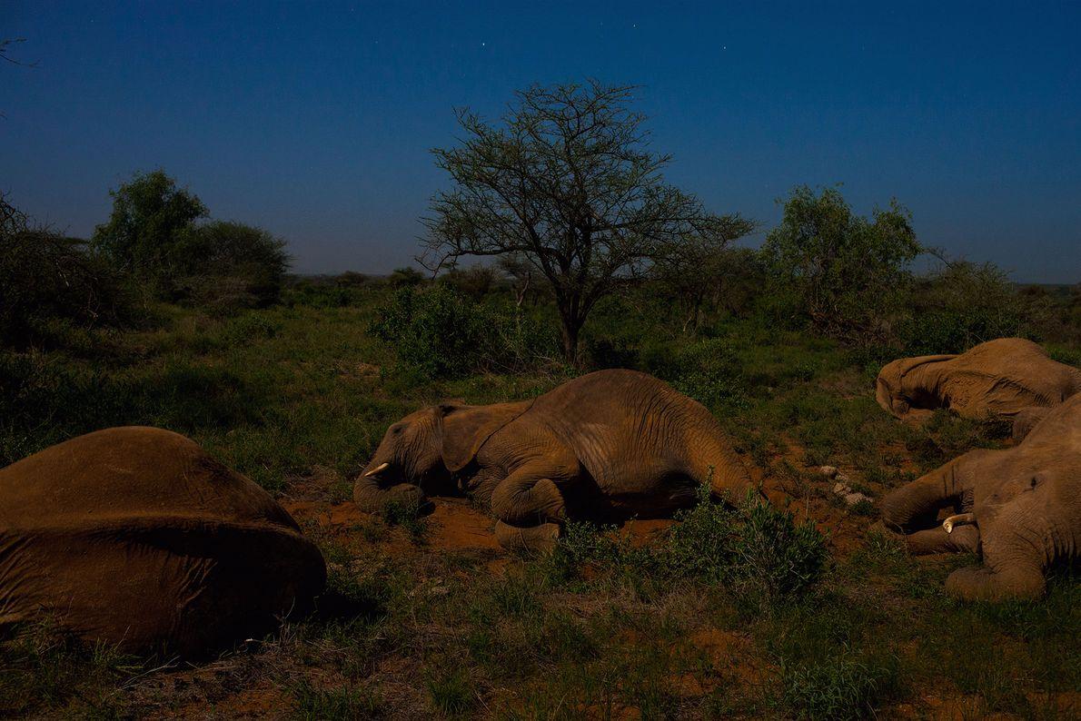 Elefantes descansam sob o luar.