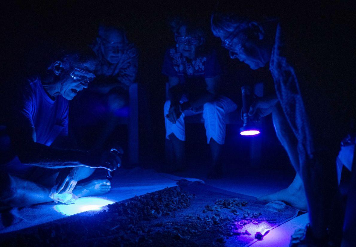 Os investigadores usam luzes ultravioleta para identificar possíveis fragmentos humanos em corais recuperados de Nikumaroro.