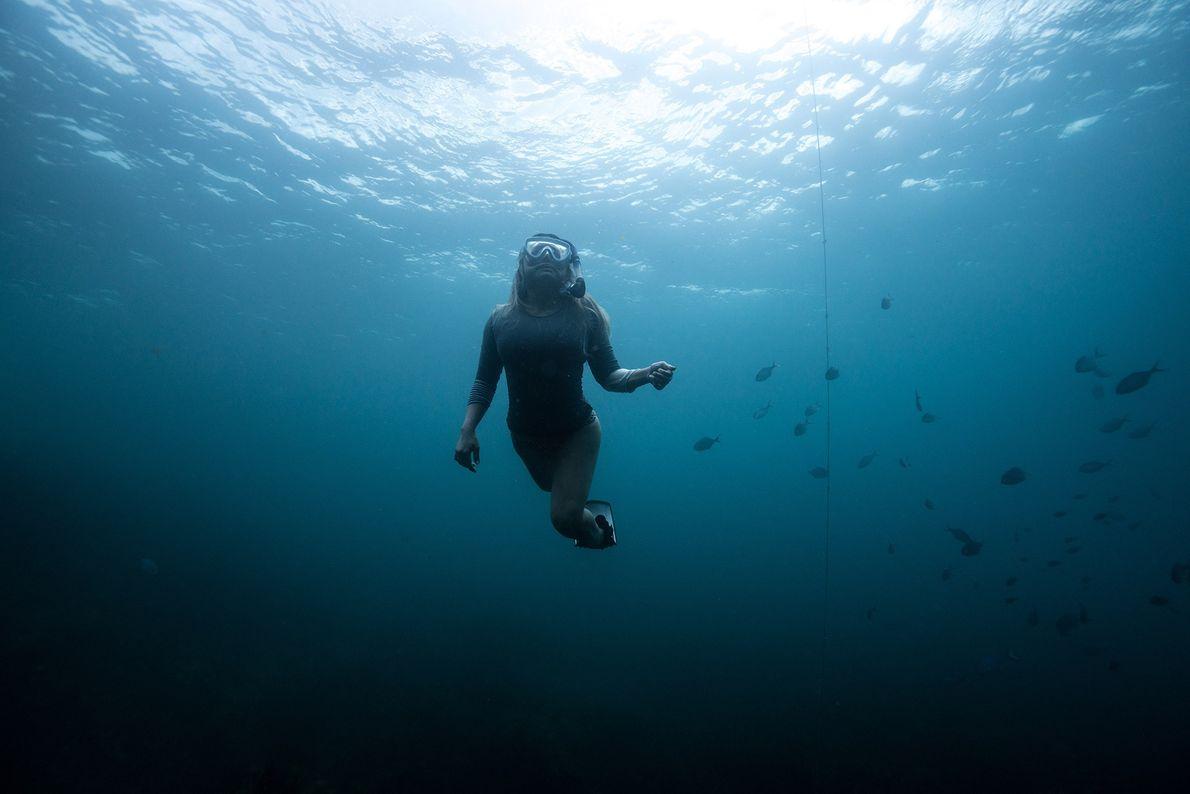 BAY OF ISLANDS, NOVA ZELÂNDIA – Uma mergulhadora a dirigir-se para a superfície do mar da ...