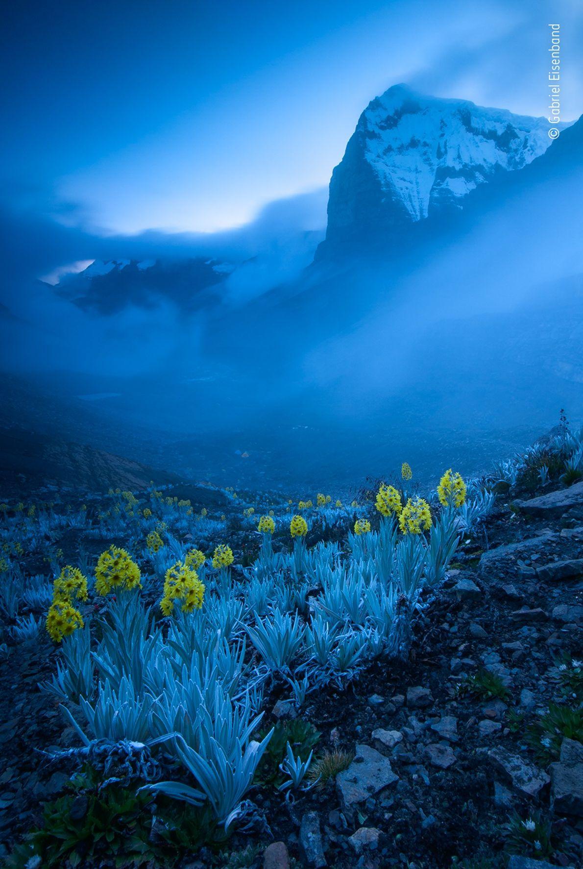 Gabriel Eisenband captou esta fotografia de margaridas arnica brancas, plantas que só existem na Colômbia. Esta ...