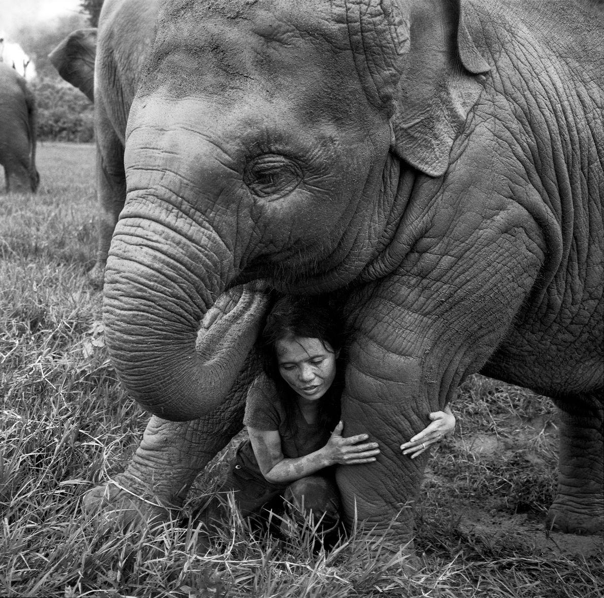 Faa Mai, um elefante de dois anos, recebe um abraço de Lek, o fundador de um ...
