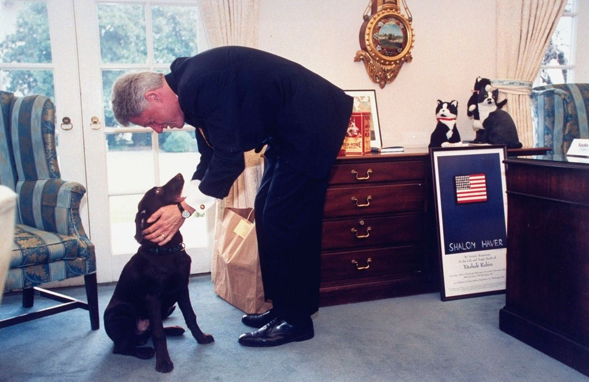 O presidente Bill Clinton com o seu labrador Buddy. Pouco depois de Clinton ter abandonado o ...