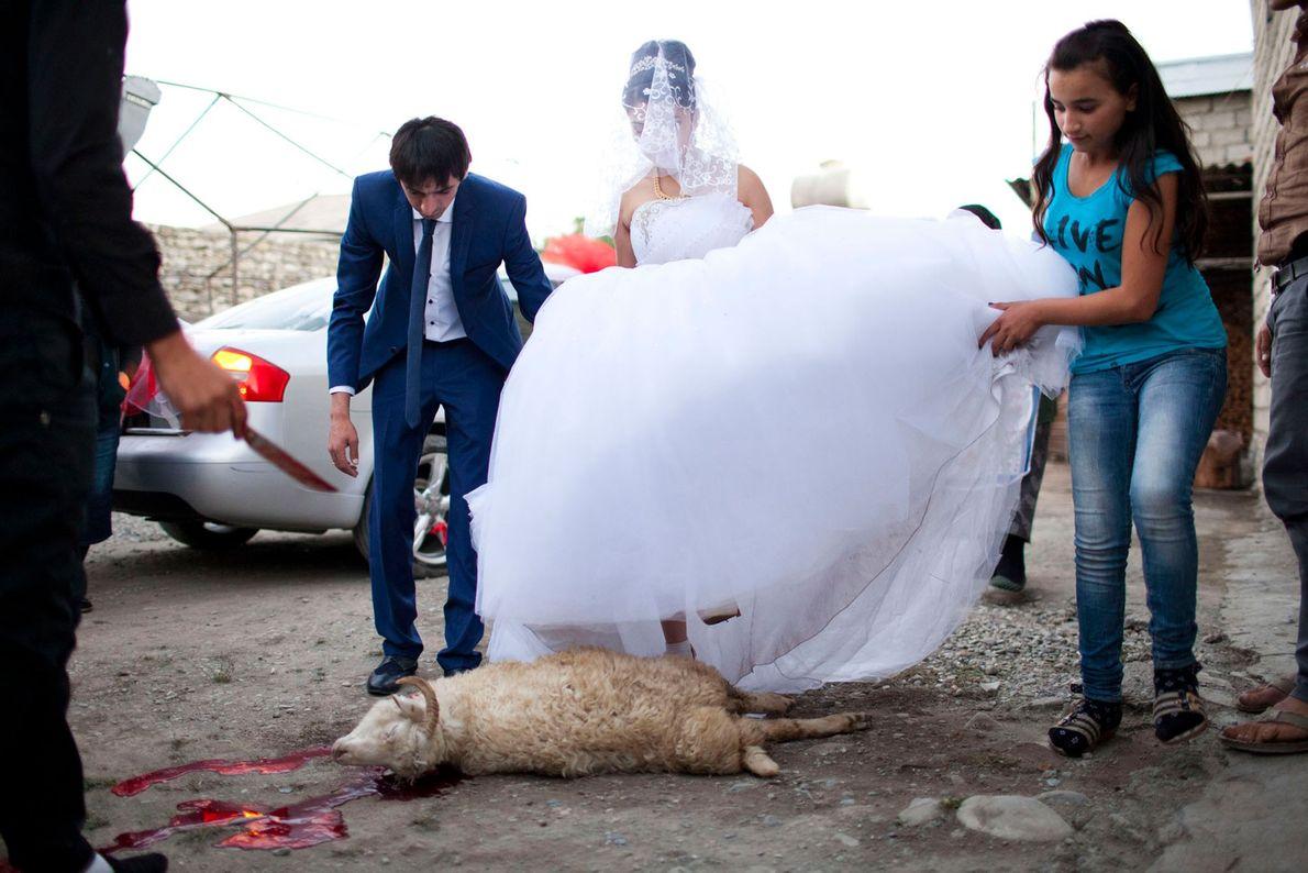 Imagem dos noivos a pisarem um carneiro morto