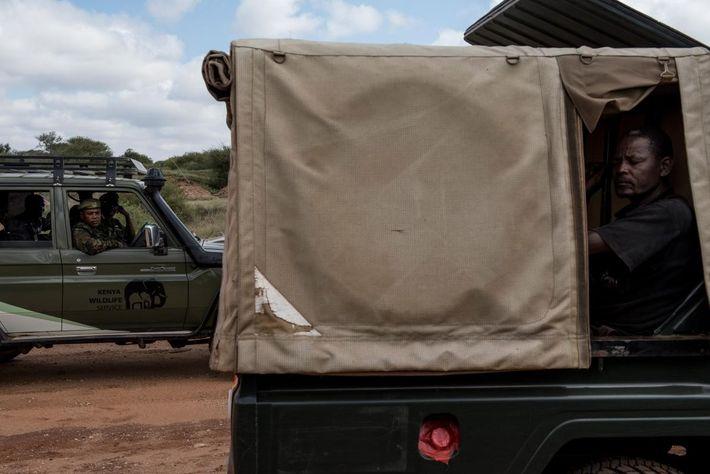 Membros da equipa preparam-se para regressar à base depois de colocarem colares em dois elefantes no ...