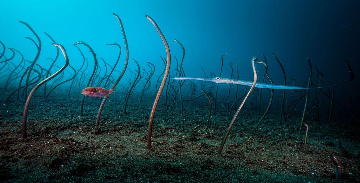 David Doubilet, fotógrafo da National Geographic, ganhou a categoria Debaixo de Água com a sua fotografia ...