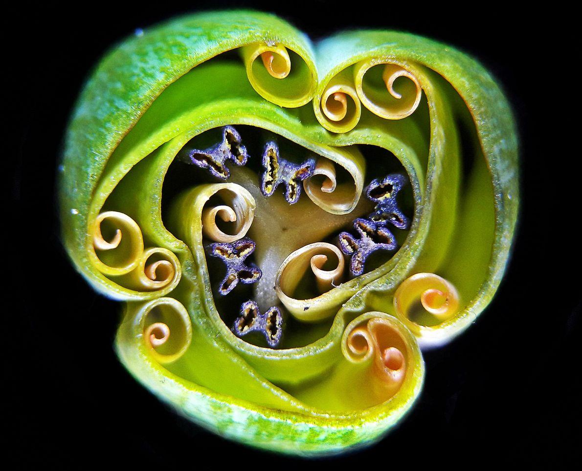 Este ornamento verde parece um adereço mágico do filme O Cristal Encantado, mas é a secção ...