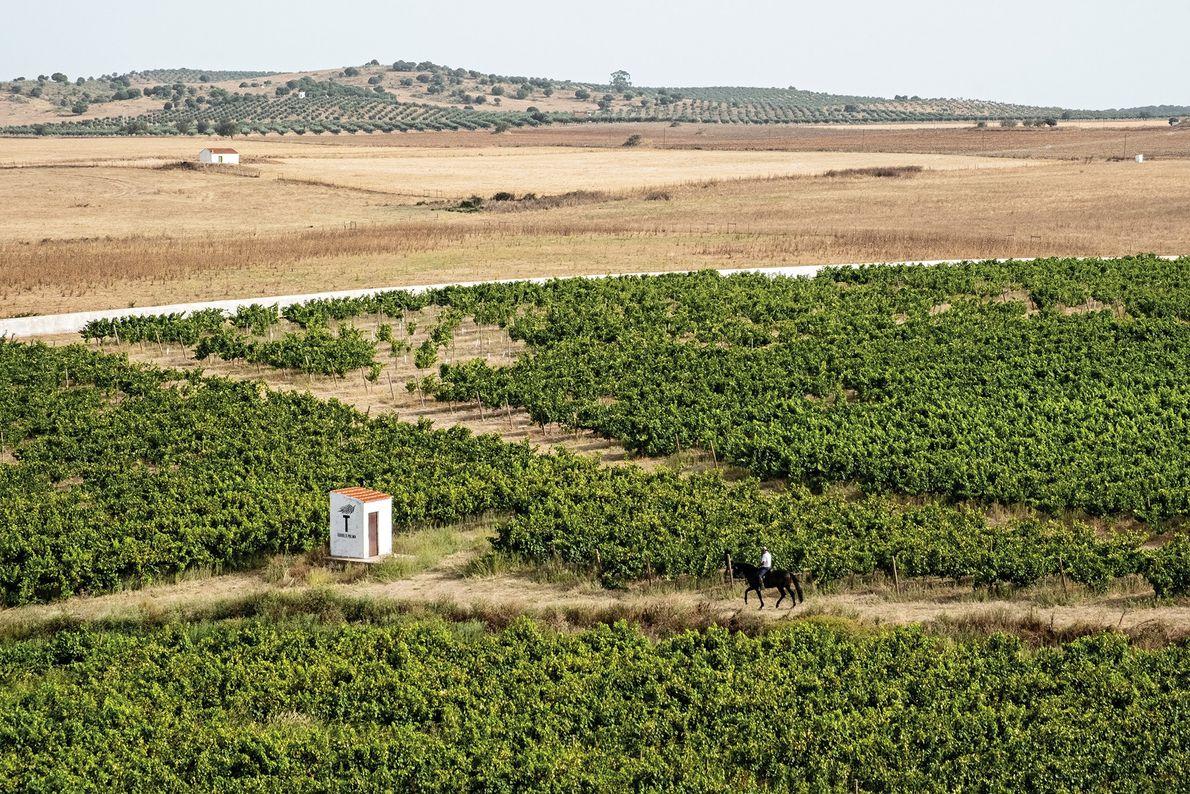 A região do Alentejo possui vastos terrenos com cortiça, ruínas romanas e vinhas, como a Torre ...