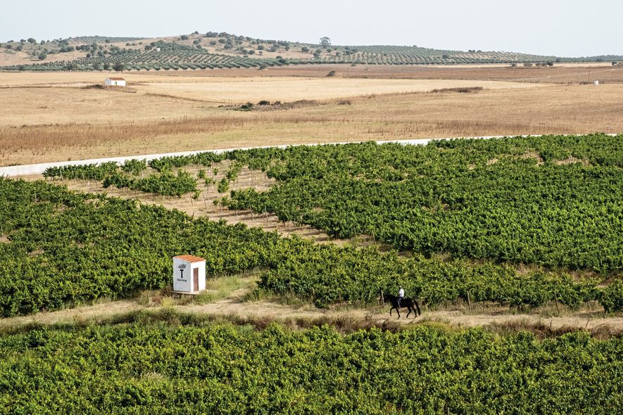A região do Alentejo possui vastos terrenos com cortiça, ruínas romanas e vinhas, como a Torre …