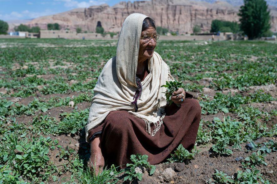 Beigom colhe legumes num campo junto aos penhascos de arenito, onde os icónicos budas de pedra ...