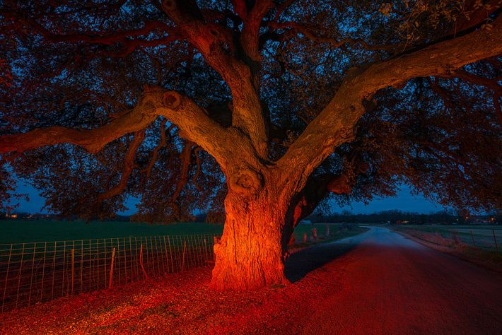 Árvores com História