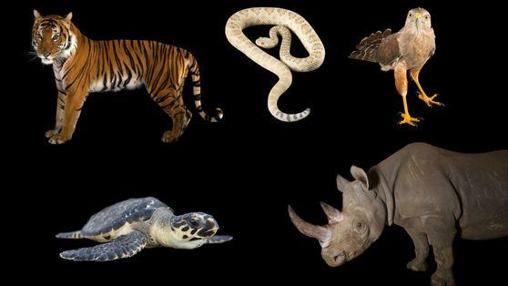 Conheça Alguns dos Animais Mais Ameaçados do Mundo.