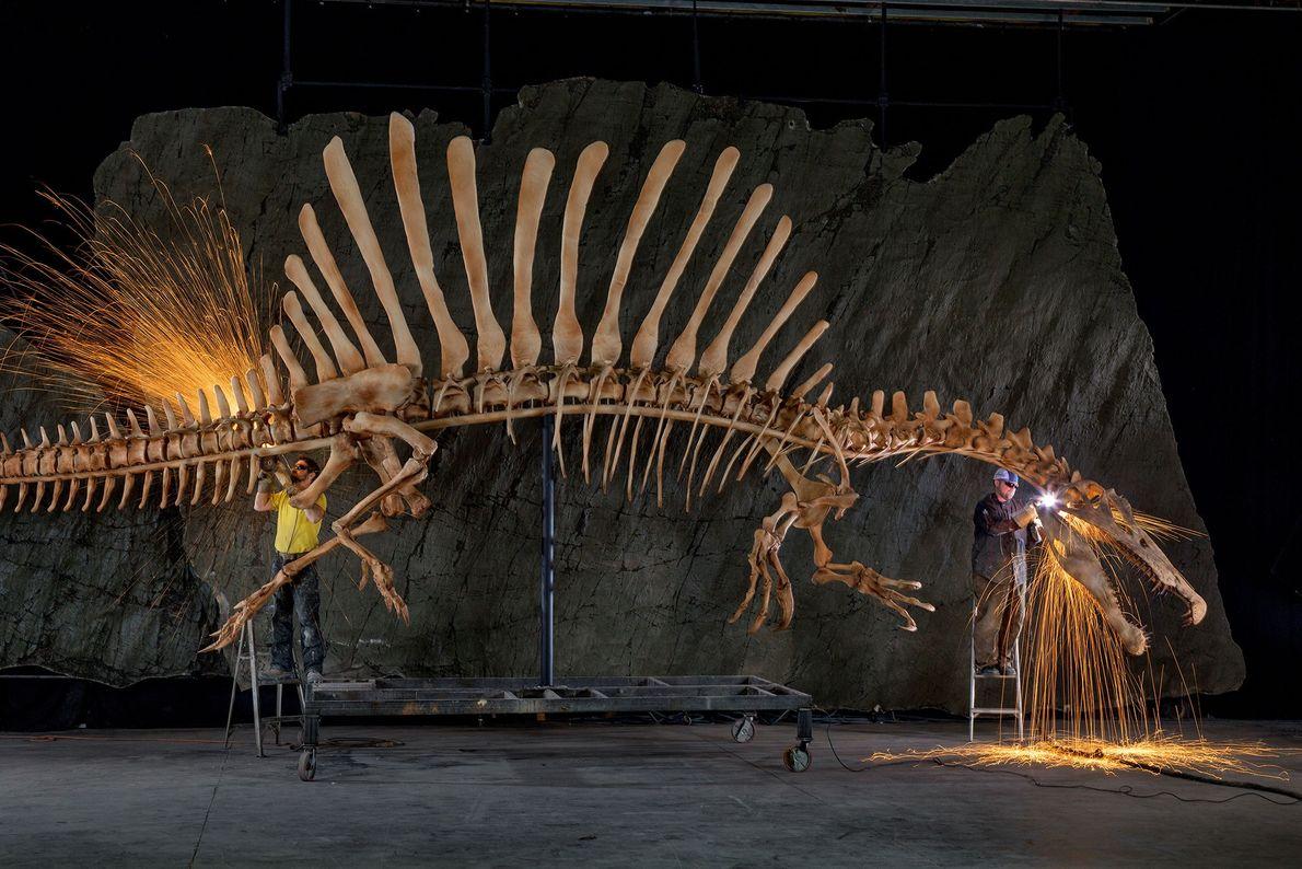 Trabalhadores da exposição dando os retoques finais numa reconstrução anatomicamente precisa, em tamanho real, de um ...