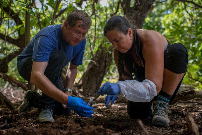 Fred Hiebert, arqueólogo da National Geographic, e o antropólogo Jaime Bach inspecionam um local na Ilha ...