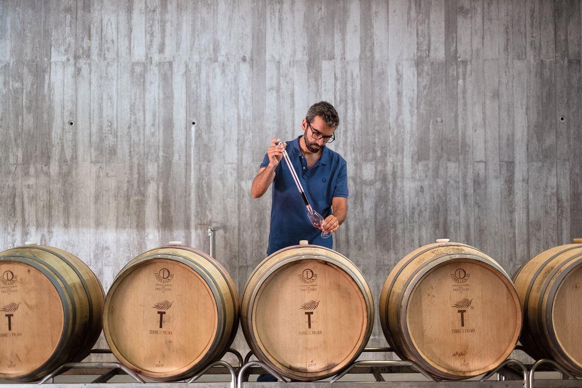 O enólogo Duarte de Deus está a trabalhar no processo de envelhecimento do vinho, na adega ...