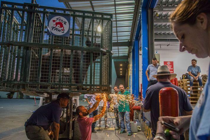 Resgate Animais Jardim Zoológico Síria