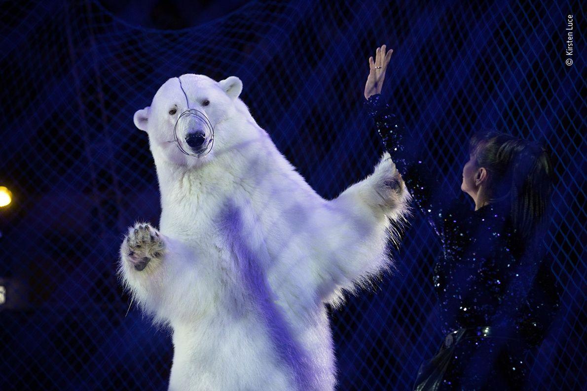 Com a sua fotografia de um urso-polar num circo russo itinerante no gelo, Kirsten Luce, dos ...