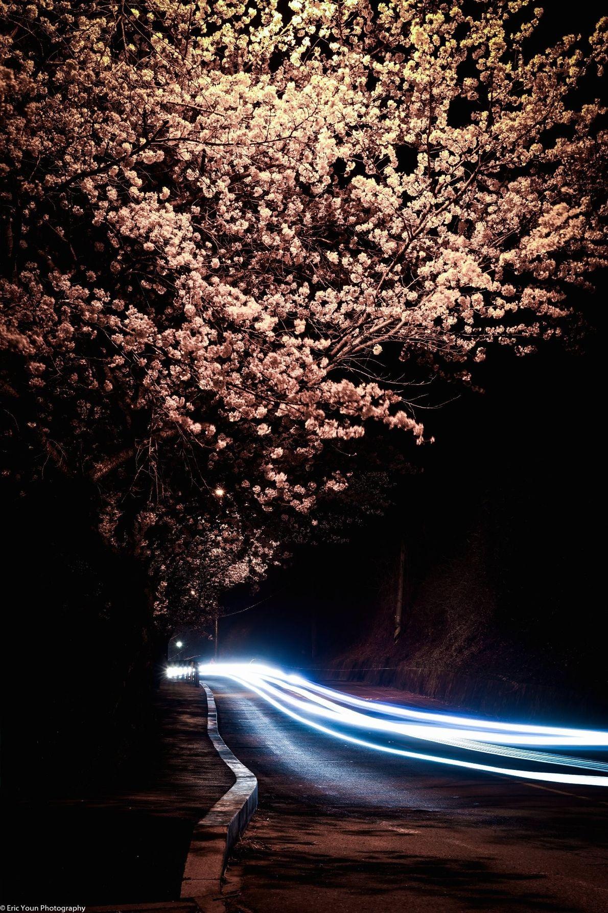 Árvore junto a uma estrada à noite