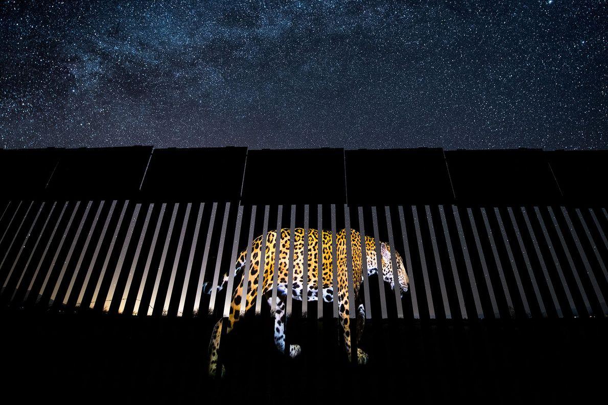 O fotojornalista mexicano Alejandro Prieto venceu a categoria de Fotojornalismo de Vida Selvagem para melhor imagem ...